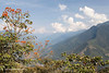 The Yungas, Coroico, Bolivia.