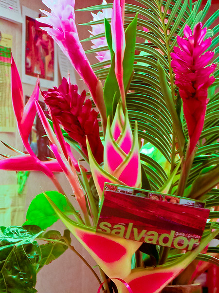 Helliconia and Bird of Paradise from Salvador, Brazil