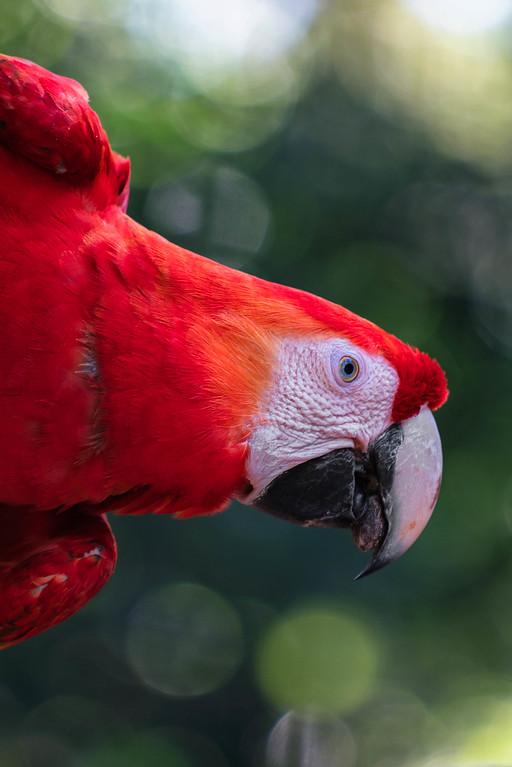 iguassu falls bird park