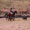 Pa 3617 gaucho's