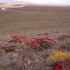 Pa 3029 Anarthrophyllum desideratum + Benthamiella azorella