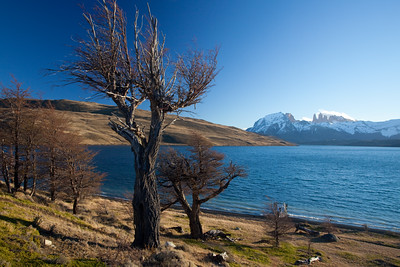 trees on shore of Laguna Azul with Torres