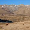 horse & mountains