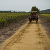 Wine Country - Colchagua Valley