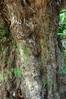 Gnarled Tree, Chile