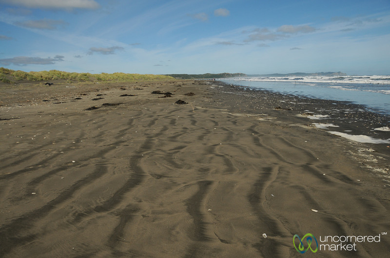The Shoreline of Parque Nacional de Chiloe - Chile