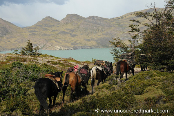 Horses Along the Trail - Torres del Paine, Chile