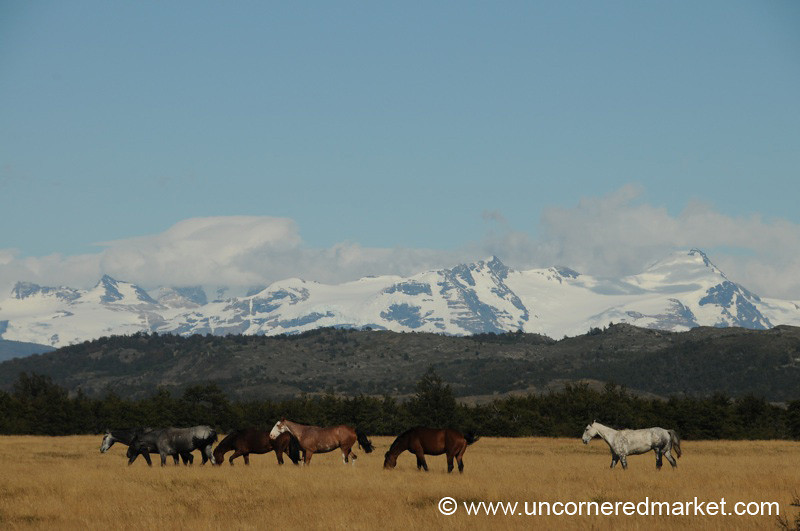 Horses Graze at Torres Del Paine National Park - Chile