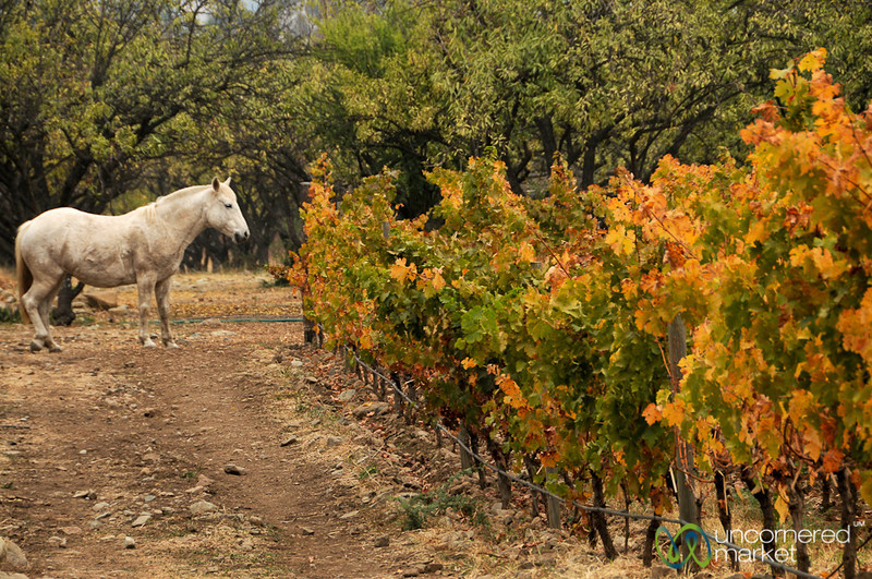 Horse and Vines - Biodynamic Wine in Maipo Alto, Chile