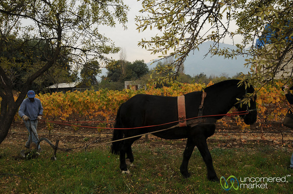 Biodynamic Wine Production - Antiyal Winery, Chile