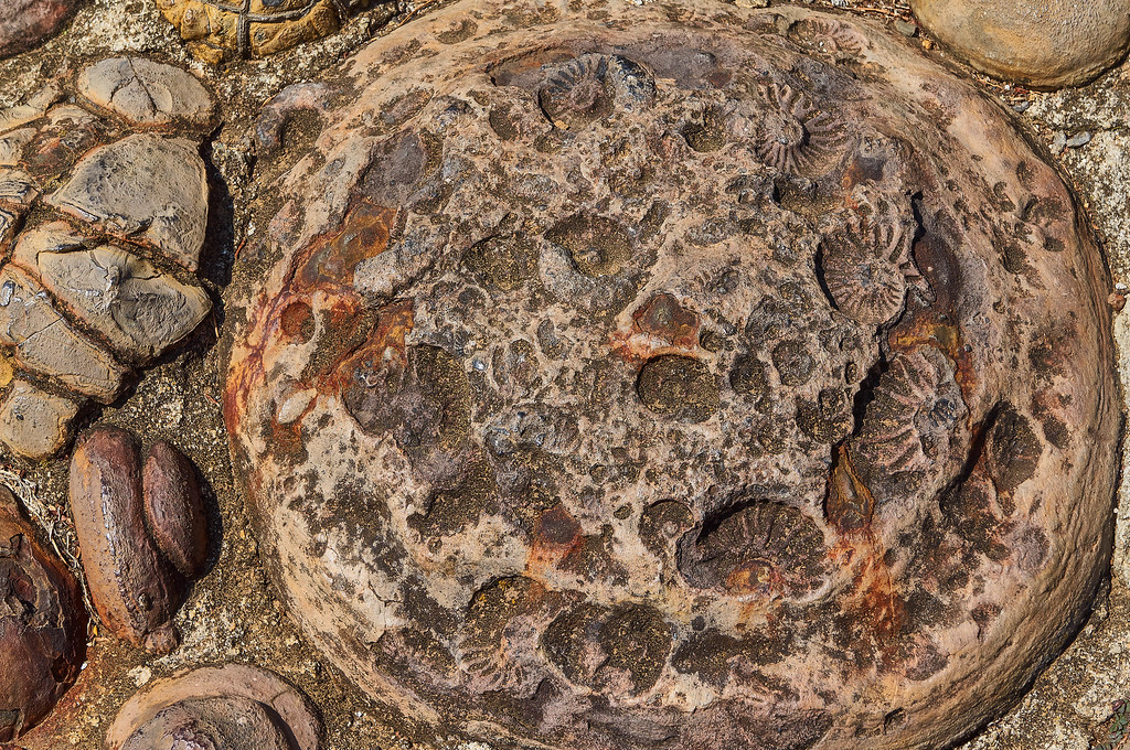 Fossils in Guane, Colombia