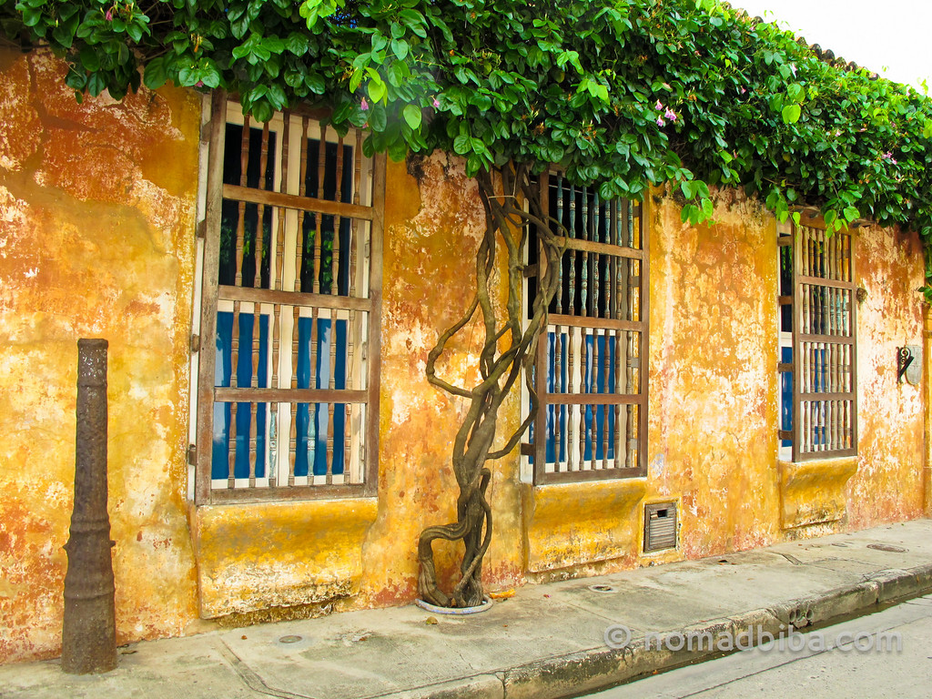 Tree Windows in Cartagena