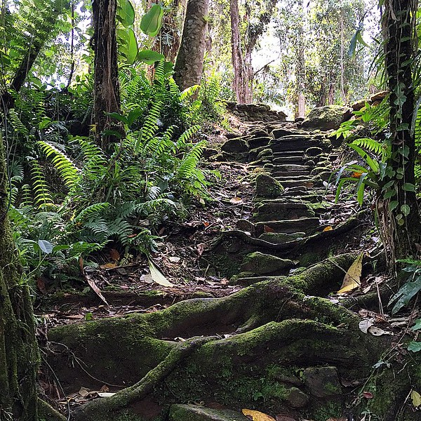 After a demanding 14  miles up, the last hurdle you must clear on the way to the Lost City (Ciudad Perdida) comes in the form of 1200 stone steps leading to the site itself. The site yielded only gold coins and limited tools upon excavation. Our Wiwa guide told us legend has it that the stairs were formed by a series of lightning strikes. via Instagram http://ift.tt/1Sb1Bx9