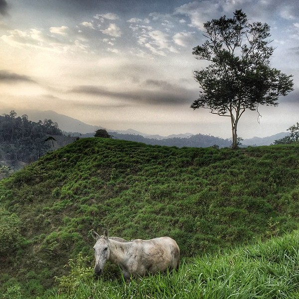 In the hills of the Lost City (Ciudad Perdida) Trek