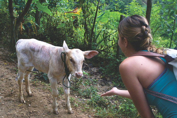 We saw more livestock than actual wildlife during the trek. June 2017