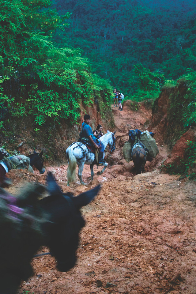 Mules carrying our food and other supplies. Due to an hour of rainfall everyday, the climb and decent were very slippery. June 2017