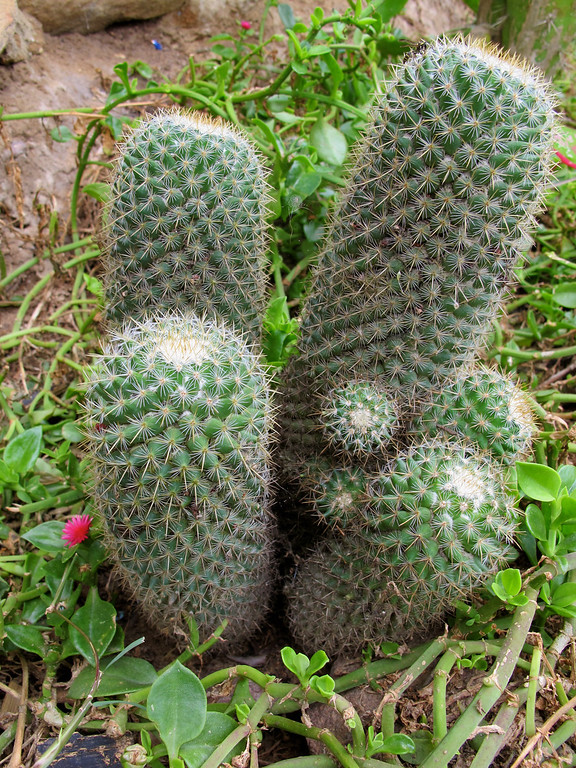 """Cacti For the story check out my post: <a href=""""http://www.nomadbiba.com/wp/2011/09/la-mojarra-the-sun-shines-in-paradise/""""> La Mojarra – The Sun Shines In Paradise</a>"""
