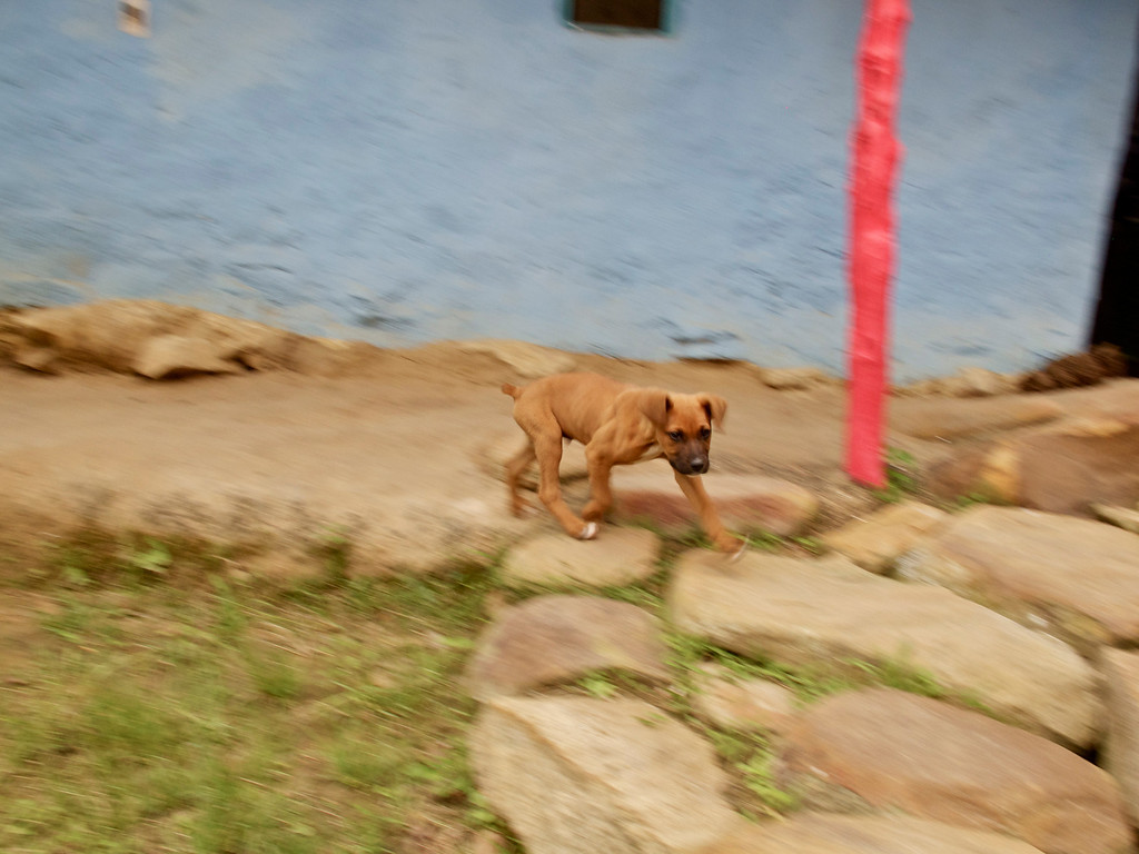 """Fast walking puppy For the story check out my post: <a href=""""http://www.nomadbiba.com/wp/2011/09/la-mojarra-the-sun-shines-in-paradise/""""> La Mojarra – The Sun Shines In Paradise</a>"""