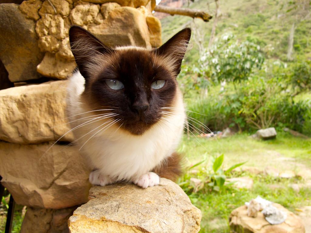 """Cat at Hostal El Sol de La Mojarra For the story check out my post: <a href=""""http://www.nomadbiba.com/wp/2011/09/la-mojarra-the-sun-shines-in-paradise/""""> La Mojarra – The Sun Shines In Paradise</a>"""