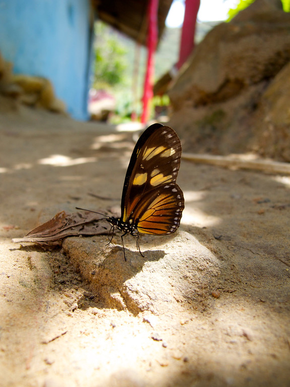 """Butterfly For the story check out my post: <a href=""""http://www.nomadbiba.com/wp/2011/09/la-mojarra-the-sun-shines-in-paradise/""""> La Mojarra – The Sun Shines In Paradise</a>"""