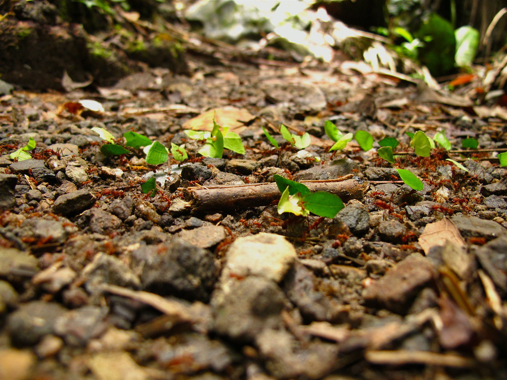 """Trail of ants For the story, check out: <a href=""""http://www.nomadbiba.com/wp/2011/06/maceo-searching-for-climbing-off-the-beaten-path/""""> Maceo – Searching For Climbing Off The Beaten Path</a>"""