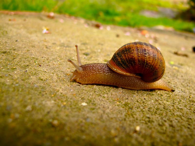 Snail in Suesca, Colombia