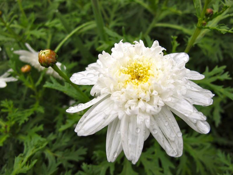 White flower in Suesca, Colombia