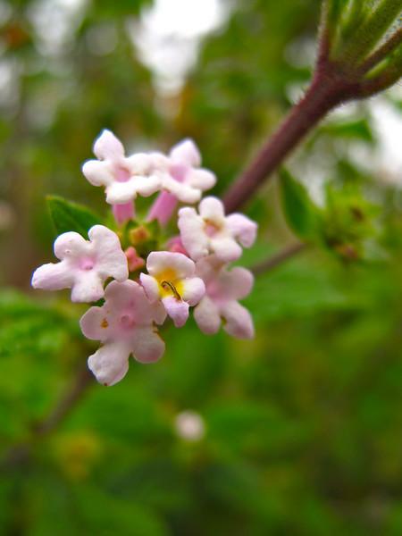 Little flowers in Suesca, Colombia
