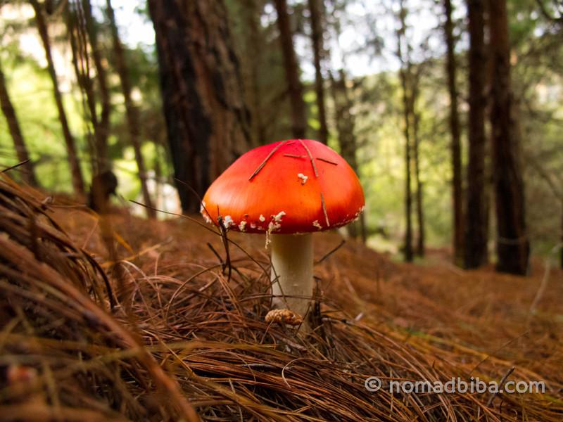 Mushroom in Suesca, Colombia