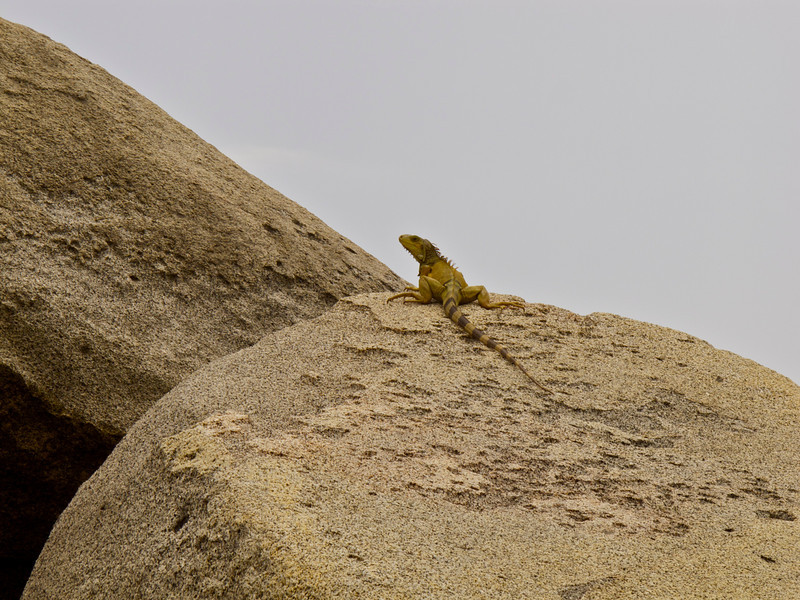 """Iguana chilling on a boulder in Tayrona National Park (Colombia) For the story, check out my post: <a href=""""http://www.nomadbiba.com/wp/2011/09/tayrona-national-park-saving-the-best-for-last/""""> Tayrona National Park – Saving The Best For Last</a>"""