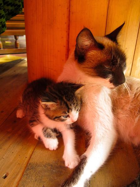 Mother cat & kitten
