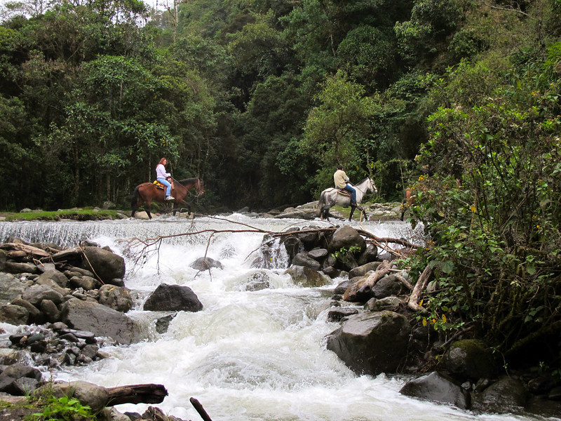 Horseback riding in Valle del Cocora (Quindio), Colombia