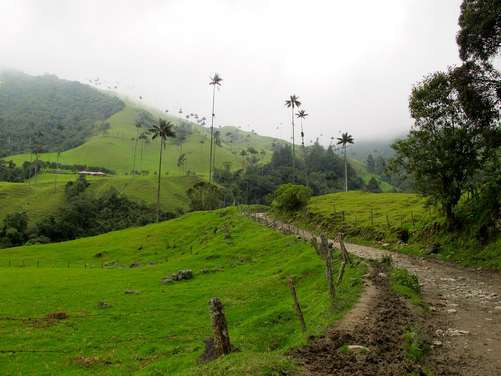 The road at Valle del Cocora (Quindio), Colombia