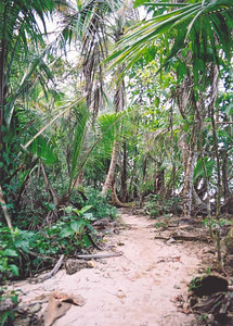 Trail, Cahuita National Park