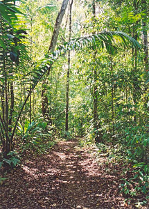 Trail in Corcovado