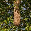 Cu 0339 nest van Troepiaal