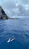Dolphins frolic at Darwin Island
