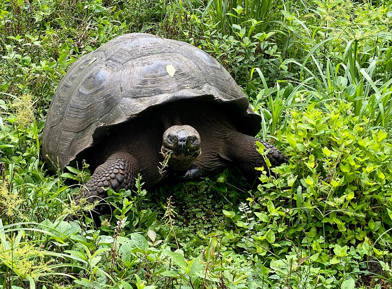 El Chato Ranch, Giant Tortoise Reserve