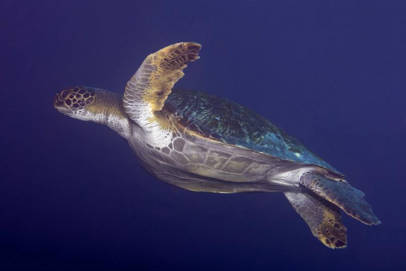 200201_Turtle3