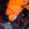200203_FishID2