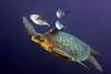 200201_Turtle