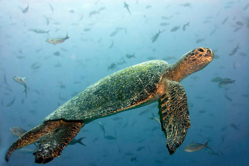 200130_Turtle2