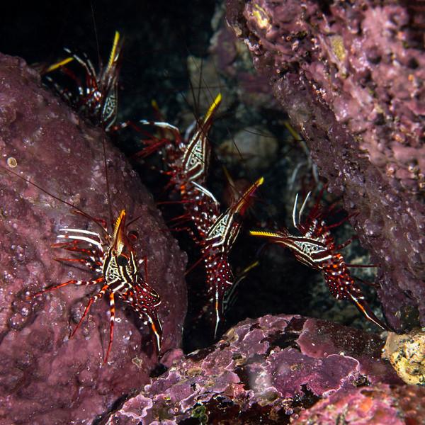 200203_Shrimps