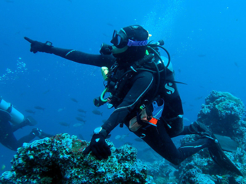 Natalia points out hammerhead sharks!