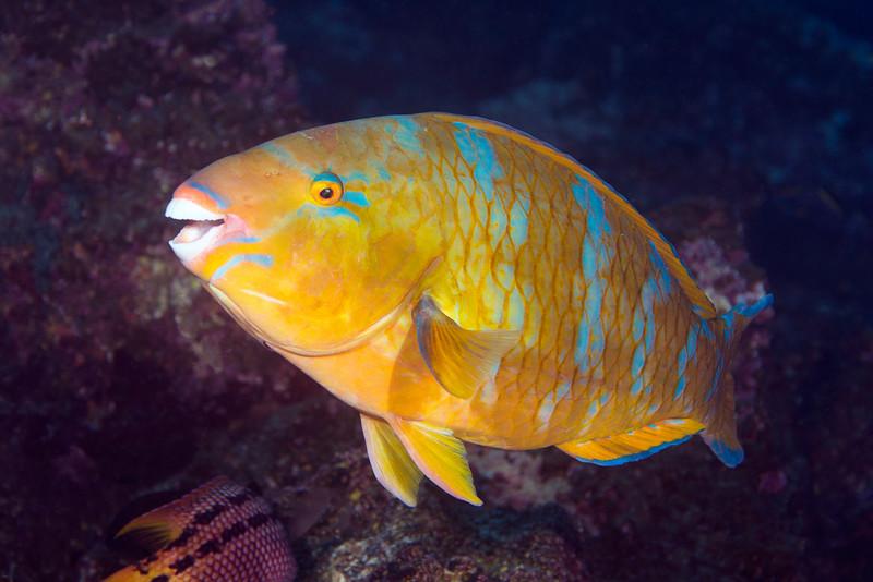200201_Parrotfish2