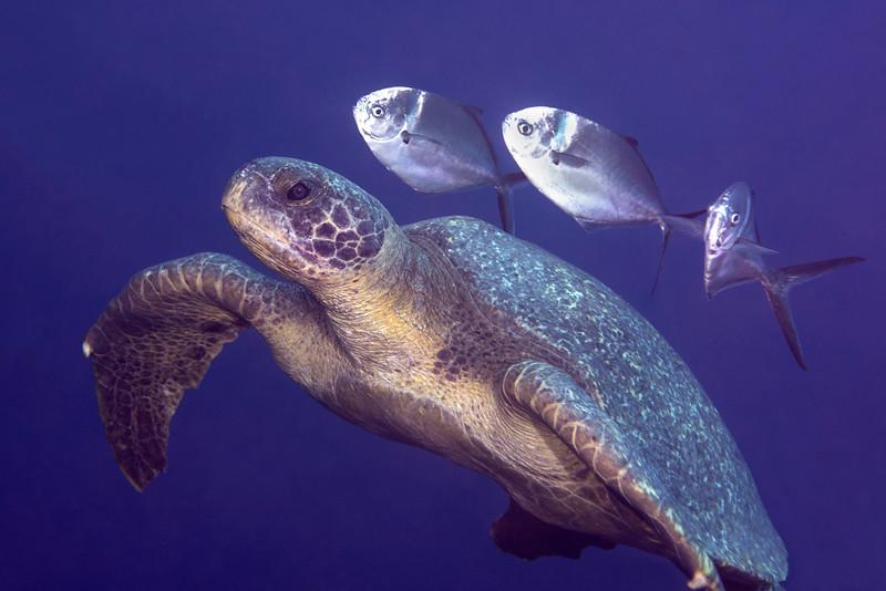 200201_Turtle4