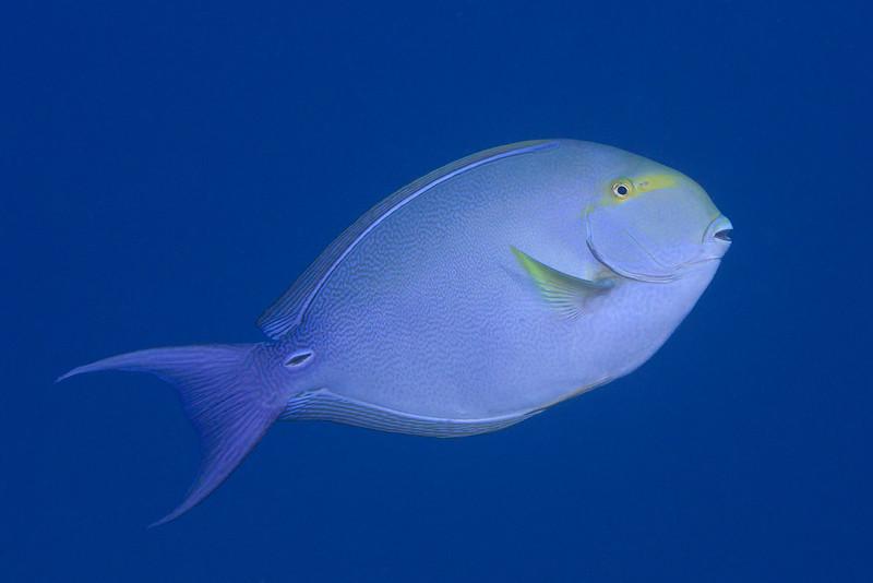 200130_FishID