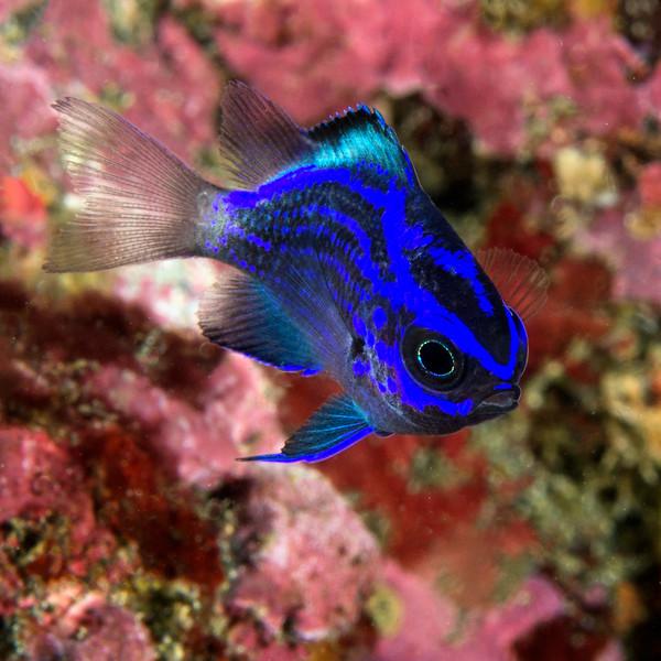 200203_FishJuvie