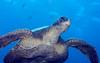 200201_Turtle5