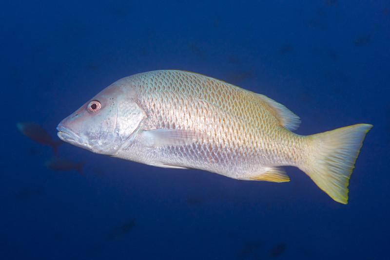 200130_FishID2